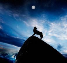 月と狼.jpg